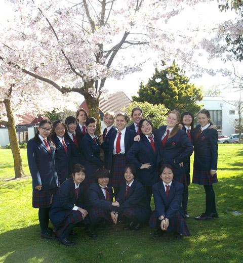 HGHS-cherry-blossom